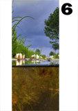 deurposter natuur onder water