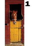 deurposter paarden collectie
