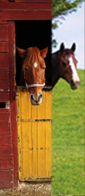 deurposter paarden collect